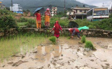"""Festivalsdel Monsó: """"Dahi Chiura Khane Din""""i""""Kheer Khane Din"""""""