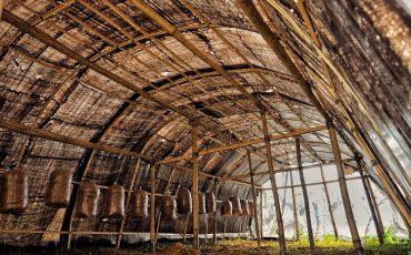 La plantación de setas de Bhimphedi